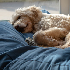 Lupos-nest-dog-bed-21