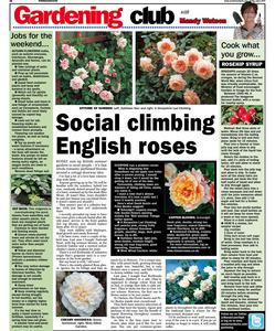 Sunderland Echo gardening column