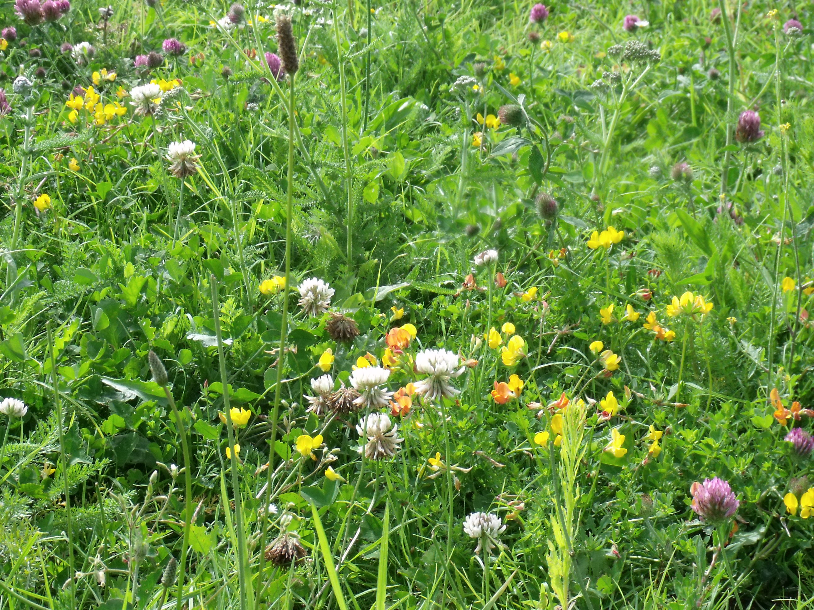 Gardening For Wildlife With Green Roofs And Floral Meadows
