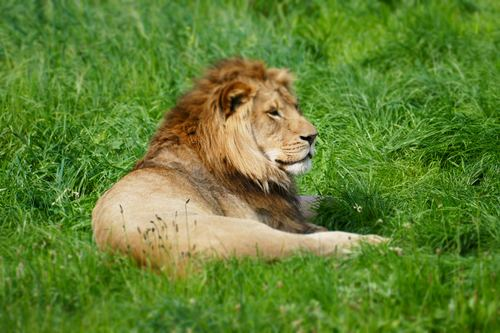 Lions at Longleat for a family day out