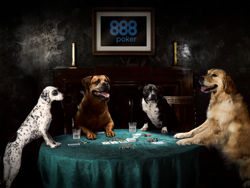 Dogs L-R Bella Mitzi Cleo Freddie