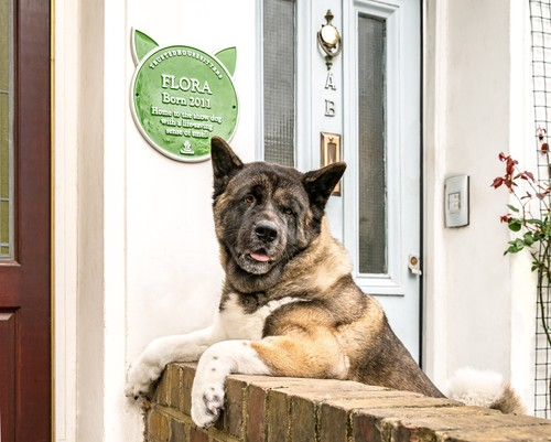 Flora the life-saving dog with plaque