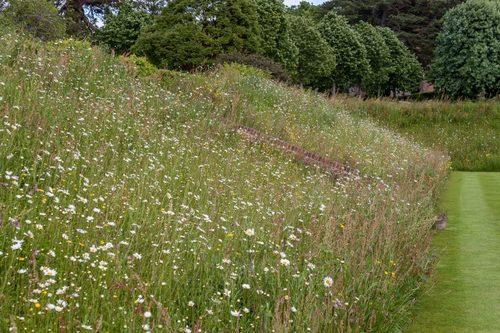 Wildflower Turf Meadow in 2018