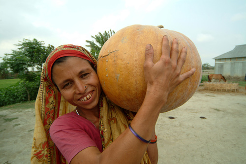 Pumpkins in Bangladesh are a lifeline