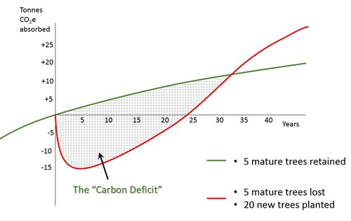 Carbon Deficit Created by Tree Felling