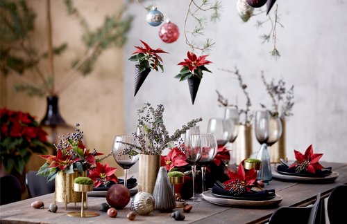 A Packed Christmas Press Kit For Plant Lovers Stars For Europe Releases 2020 Photography And Home Decor Trends With Poinsettias