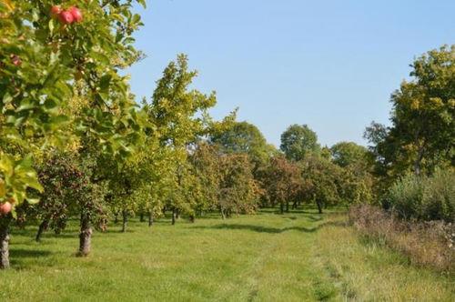 Stewley Orchard, Taunton Cider Company
