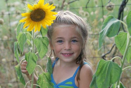 Grow sunflowers for fun and a good cause