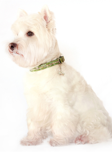 Emerald Green Crystal Collar & Lead Set