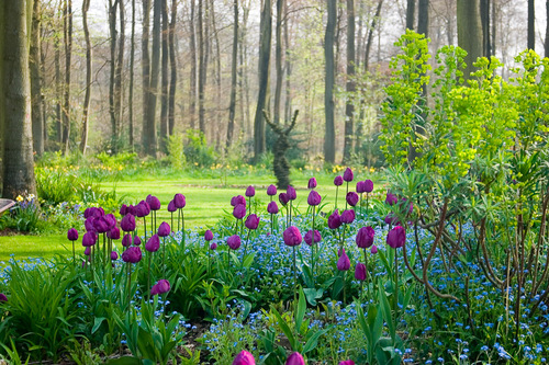 Blooming good idea to plant bulbs now