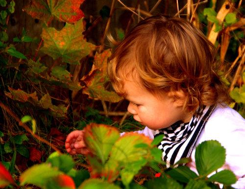 Gardening for Kids at MyGardenSchool