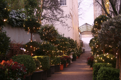 Clifton Nurseries at Christmas
