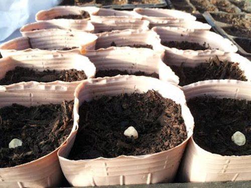 becausewecare Biodegradable Seedling Pot
