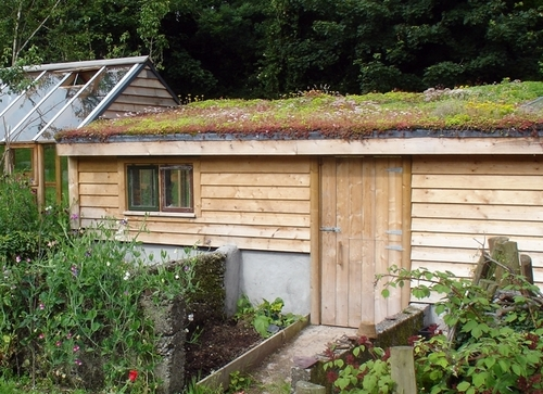 pollinator friendly green roof