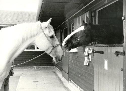 Horse Trust Remembers Hyde Park Horses