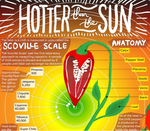 Grow your own Chili peppers, infographic