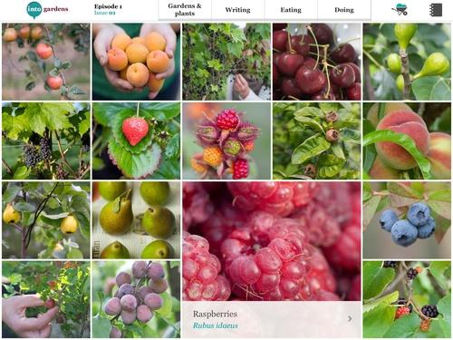 intoGardens Fruit list feature