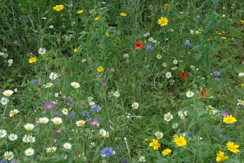 Meadow in September