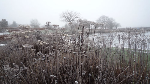 Landscape in the frost