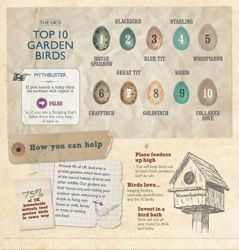 Anglian birdwatching infographic