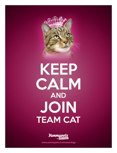 Keep Calm and Join Team Cat poster