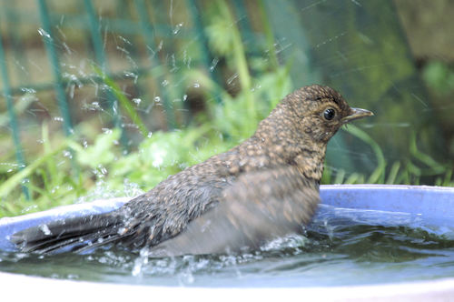 Water the birds, NOT the lawn!