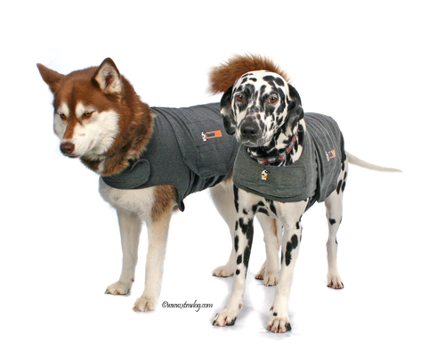 Thundershirts being worn
