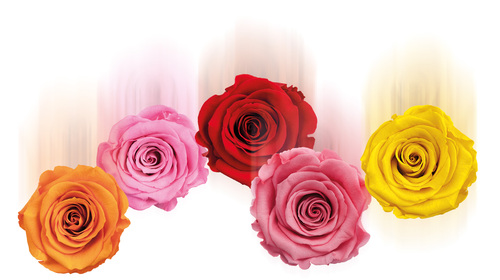 London raining roses