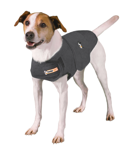 Relaxed Dog in a ThunderShirt