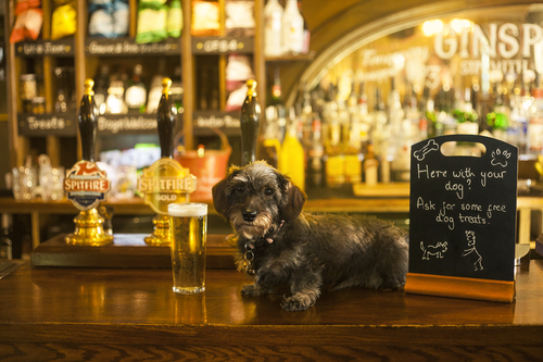 Dog Buddy searches for Dog Friendly Pubs