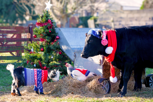 A farm full of festive knits