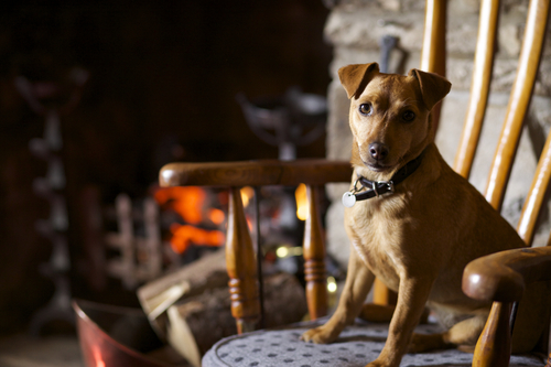 Dog by the Fire at the Rose & Crown pub