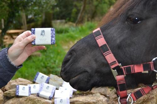 Dartmoor pony Smartie loves our soap!