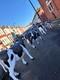 Happy Cows 3
