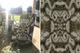Moksha Liquorice Velvet Triton Tub Chair