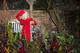 Christmas Idea: a gardening course