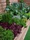 Garden on a Roll Edible Border in a bed