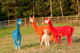 TOFT ALPACAS GET RED HOT