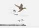 Mallard beak inspires Bullet Train