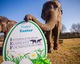 Easter Elephants at Woburn Safari Park