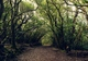 Tenerifan laurel forest