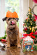 Yuletide Delights Dog Selection Box