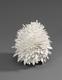 Silver Pine Cone 2007 by Junko Mori