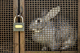1 of 680,000 rabbits kept alone in UK