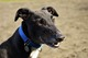 Marvellous Murphy needs a super fosterer