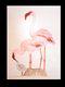 Flamingoes by Hermann Heinzel