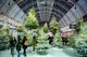 Ideal Home Show at Christmas trees