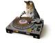 Turntable Cat Scratch Pad: £14.99