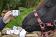 Dartmoor pony Smartie loves our soap!